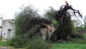 vista previa del artículo El temporal da trabajo a 171 parados de Gerona.