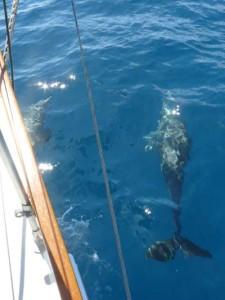 dofins