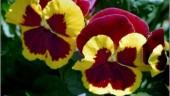 vista previa del artículo Multan a una mujer por pisar y robar flores de una jardinera