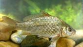 vista previa del artículo Blog: Pesca Carp