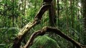 vista previa del artículo Detenida una mujer de 40 años en la Jonquera por llevar ayahuasca